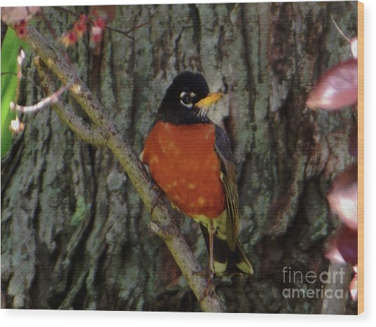 Michigan State Bird Robin Wood Print