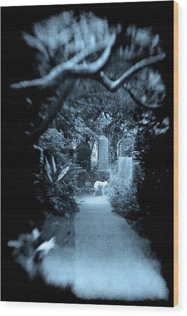 Midnight In The Garden O Wood Print