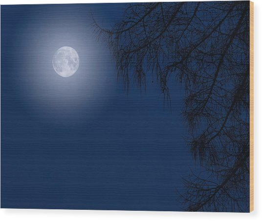 Midnight Moon And Night Tree Silhouette Wood Print