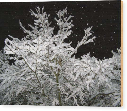 Midnight Snow 4 Wood Print by Christine Sullivan Cuozzo