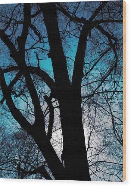 Might Oak 16x20 Wood Print