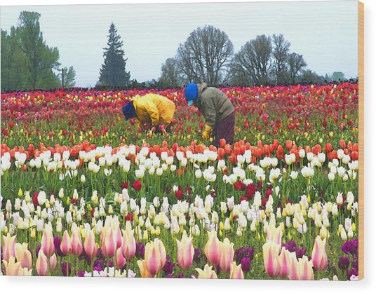 Migrant Workers In The Tulip Fields Wood Print by Margaret Hood