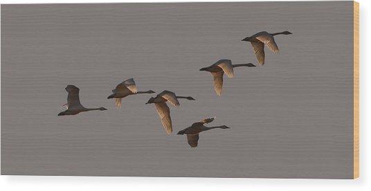 Migrating Swans Wood Print