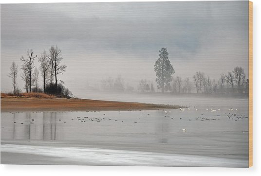 Migration At Rest Wood Print