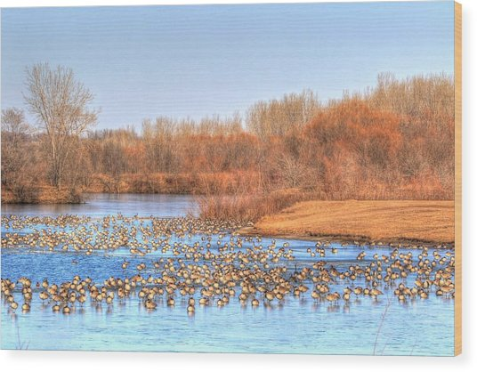 Migration Break On Ice Wood Print