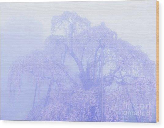 Miharu Takizakura Weeping Cherry01 Wood Print