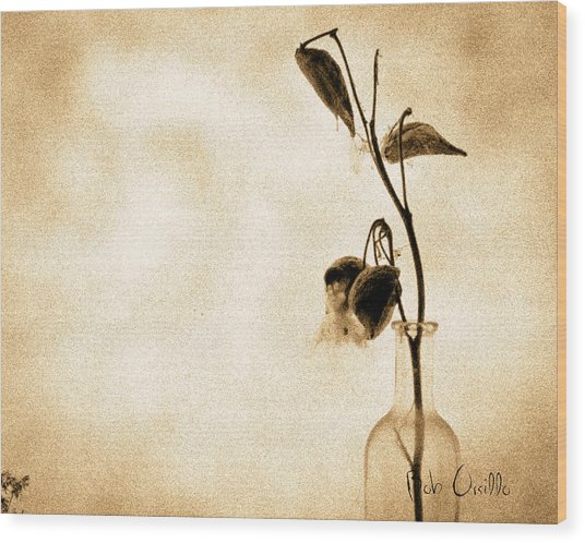Milk Weed In A Bottle Wood Print