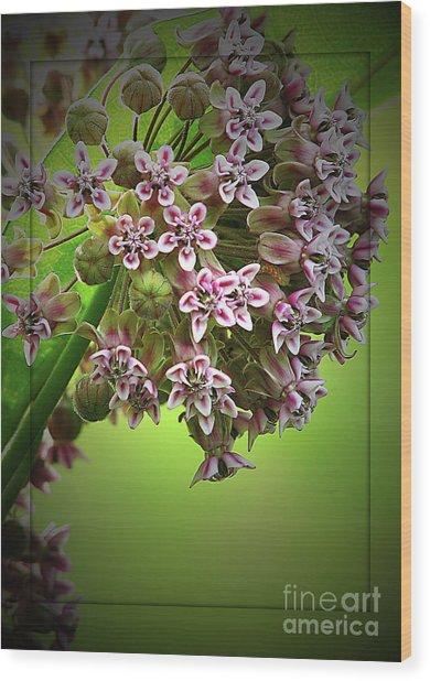 Milkweed In Bloom Wood Print by Deborah Johnson