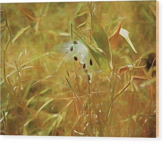 Wood Print featuring the mixed media Milkweed In Sunlight 2 by Lynda Lehmann