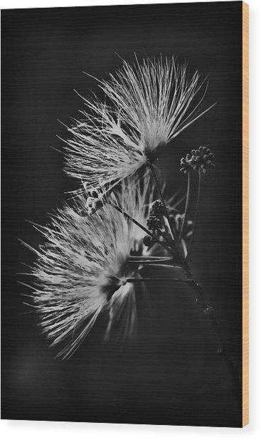 Mimosa Drama Wood Print