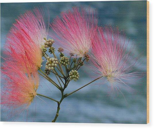 Mimosa Wood Print by Farol Tomson