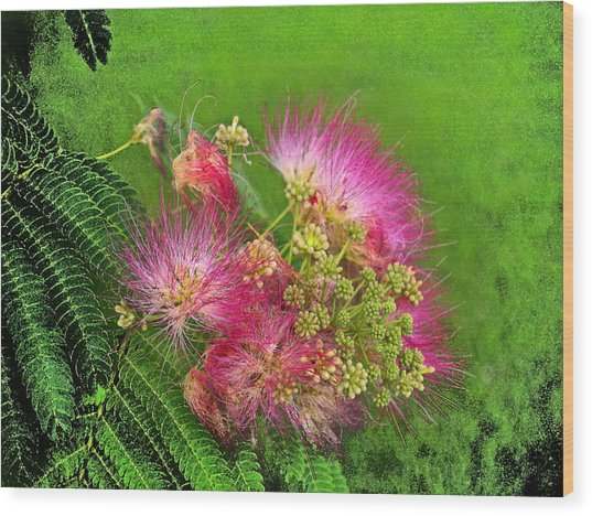 Mimosa II Wood Print by James Granberry