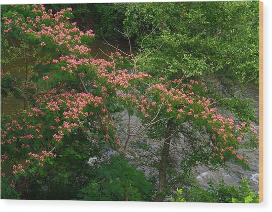 Mimosa On The Dan River Wood Print