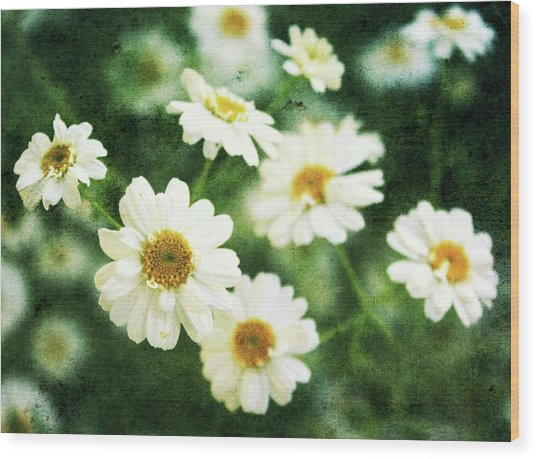 Mini Spring Daisy's Wood Print by Cathie Tyler