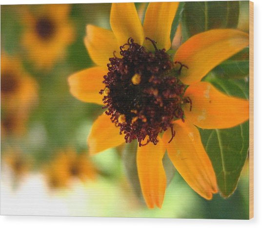 Mini Sunflower Wood Print by Melissa Parks