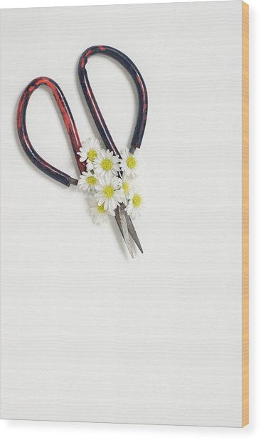 Miniature Daisies And Vintage Scissors Wood Print