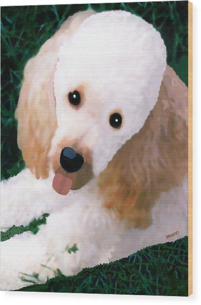 Miniature Poodle Albie Wood Print