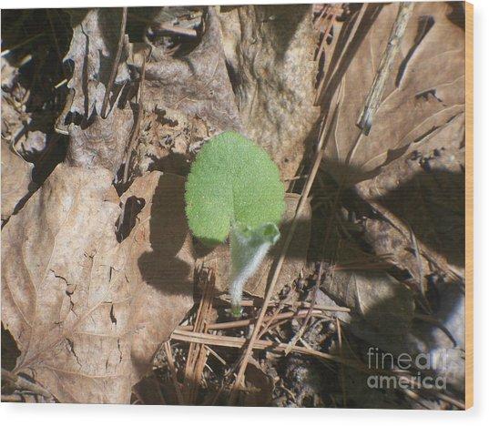 Minnesota New Plant Life Wood Print by Sacred  Muse