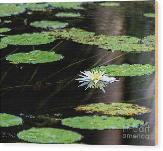 Mirror Lily Wood Print