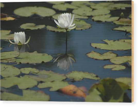 Mirrored Reflections 2 Wood Print by Devane Mattoni