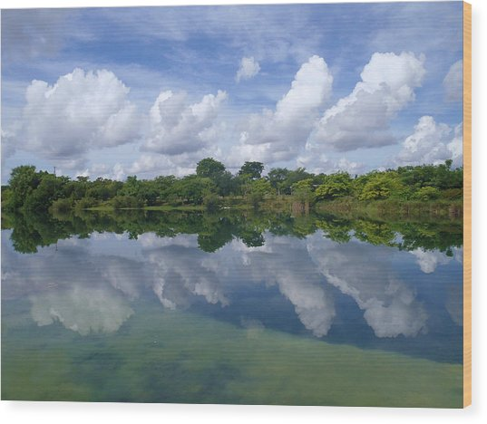Mirrored Wood Print by Tammy Chesney