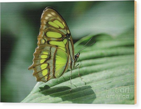 Miss Green Wood Print