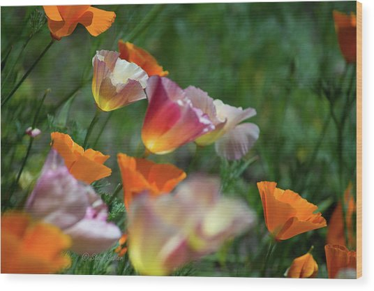 Mission Bell Poppies Wood Print