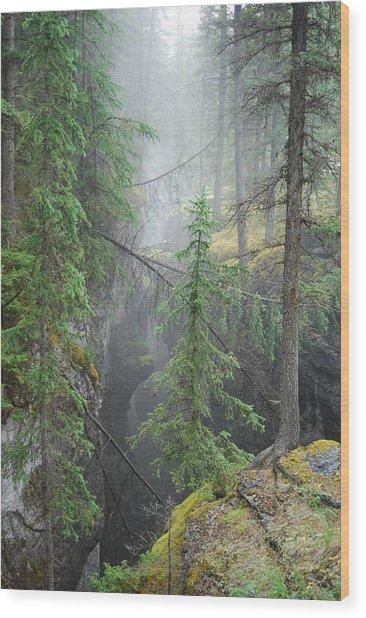 Mist Forest Wood Print by Kim Blumenstein