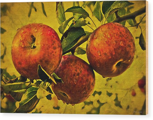 Mister's Apples Wood Print