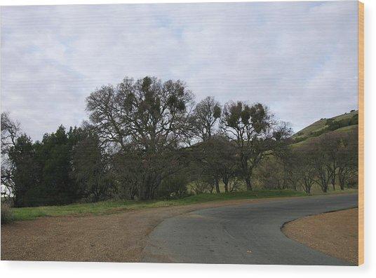 Mistletoe Oaks Wood Print