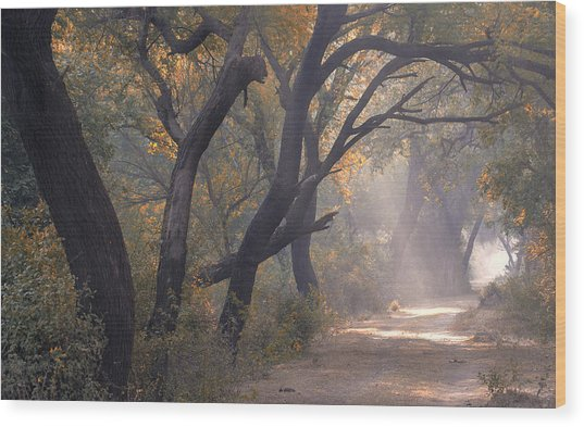 Misty Morning, Bharatpur, 2005 Wood Print