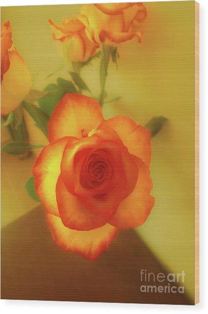 Misty Orange Rose Wood Print