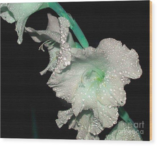 Misty Petals Wood Print by Debbie May