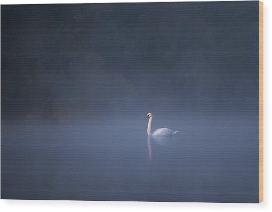 Wood Print featuring the photograph Misty River Swan by Davor Zerjav