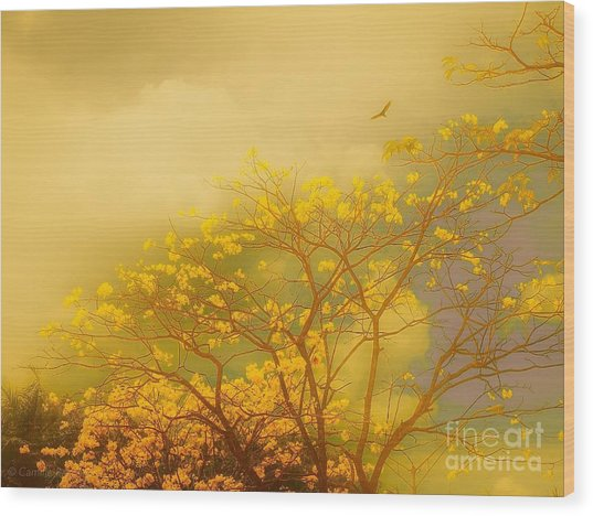 Misty Yellow Hue -poui Wood Print