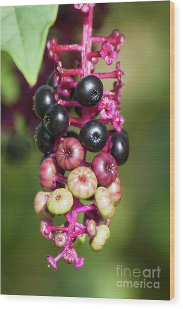 Mixed Berries On Branch Wood Print