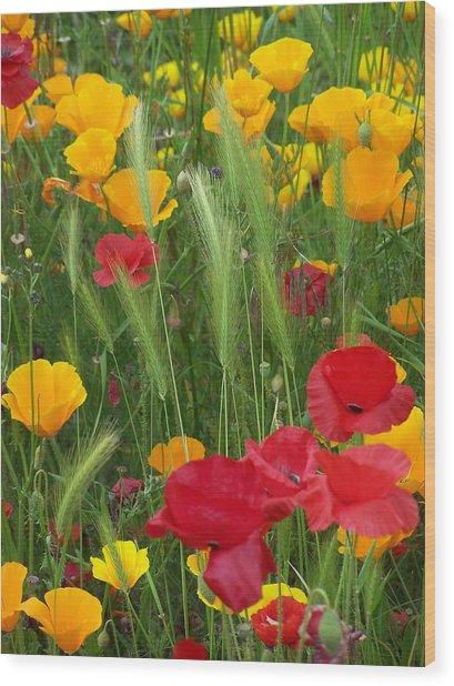 Mixed Poppies Wood Print