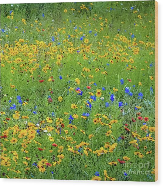 Mixed Wildflowers In Bloom 538 Wood Print by D Davila