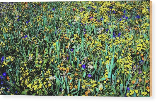 Mixed Wildflowers In Texas Wood Print