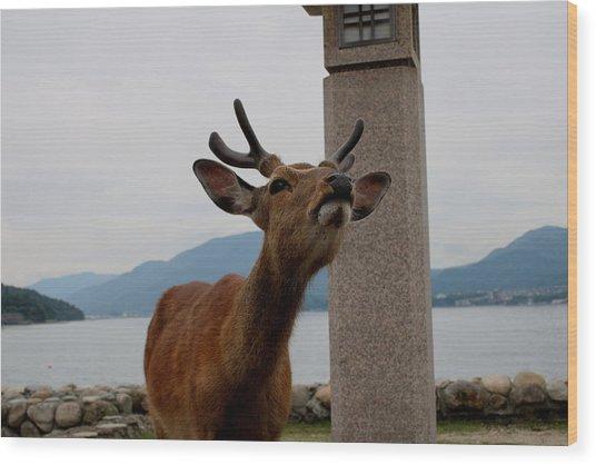 Miyajima Deer Wood Print
