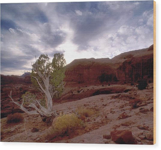 Moab Dreams Wood Print by Kim Blumenstein
