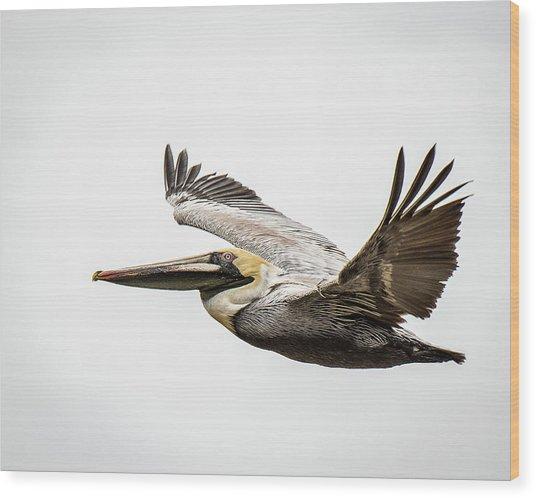 Mobile Bay Pelican Wood Print