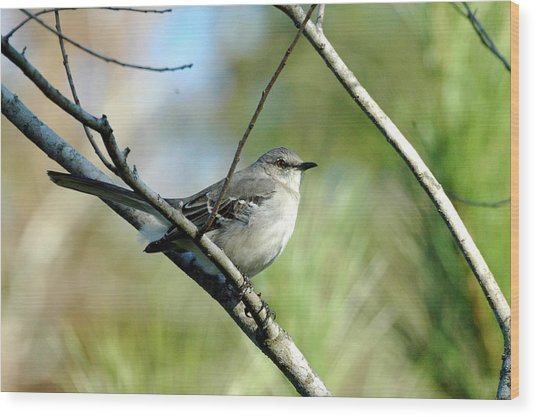 Mockingbird In Green Wood Print by Teresa Blanton