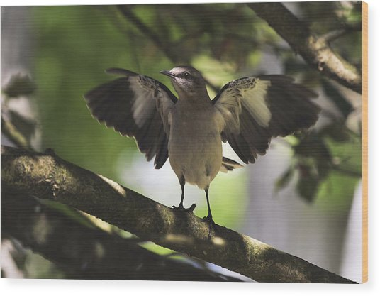 Mockingbird  Wood Print
