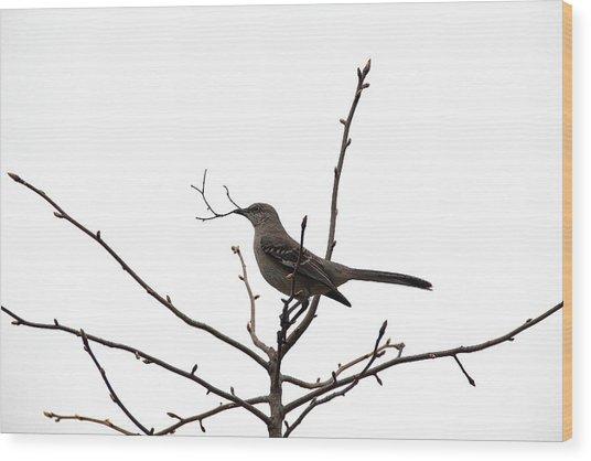 Mockingbird With Twig Wood Print