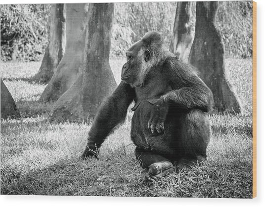 Modeling Gorilla Wood Print