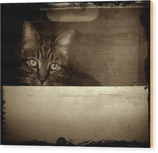Mollie In A Box Wood Print