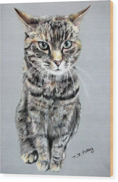 Molly 2 Wood Print by Tanya Patey