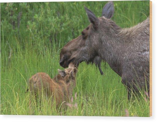Mom And Baby Moose Wood Print