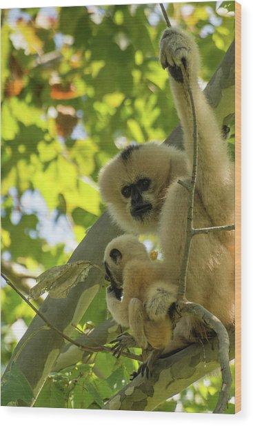 Mommy Gibbon Wood Print
